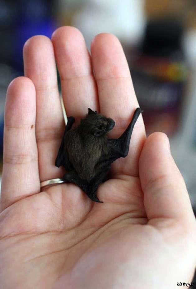 Найменші тварини в світі (11 фото)