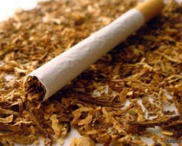 Ще раз про шкоду куріння (10 фото)