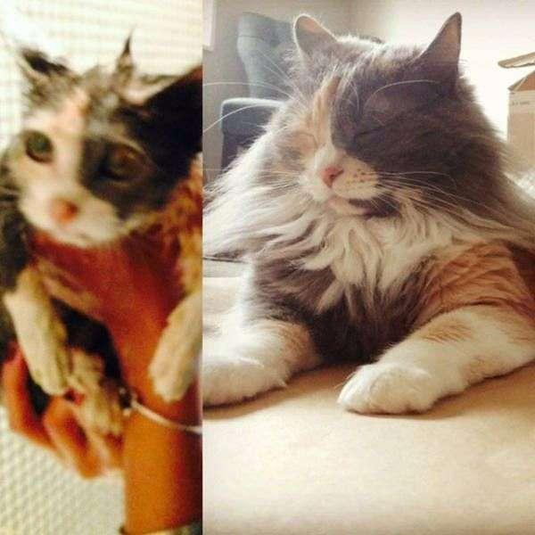 Тварини в притулку і вдома (33 фото)
