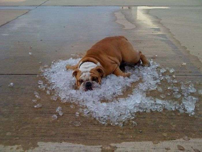 Тварини, шукають порятунку від спеки (22 фото)
