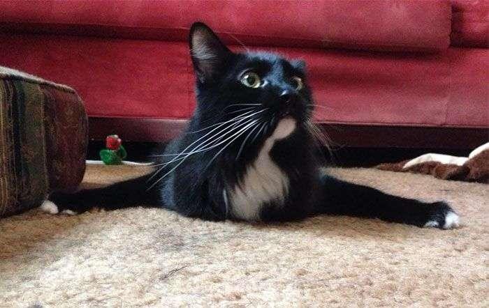 Дивна поведінка кішок (30 фото)