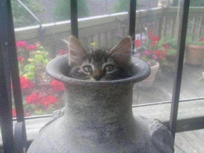 Коти, що виглядали з своїх укриттів (20 фото)