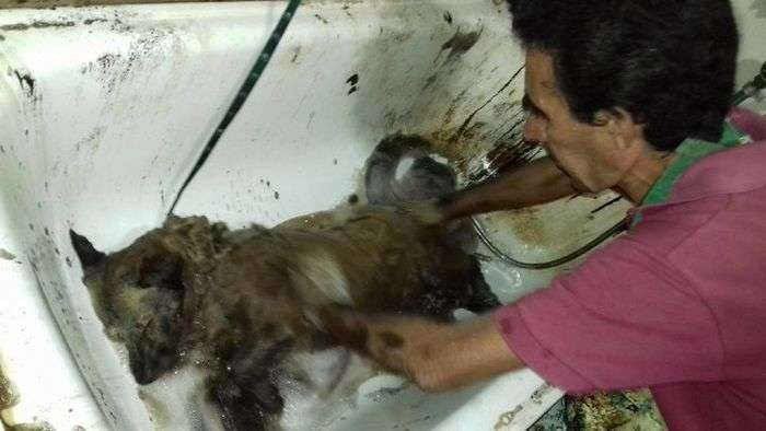 Порятунок пса, облитого мазутом (8 фото)