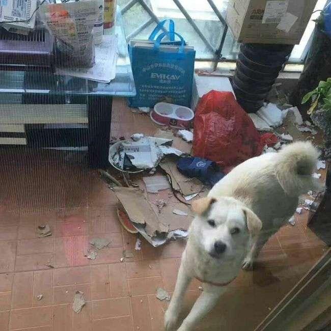 Китаєць врятував собаку, продавалася на забій (8 фото)