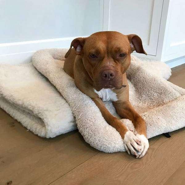 Собака, яка прожила 8 років на ланцюгу, знайшла люблячого господаря (9 фото)
