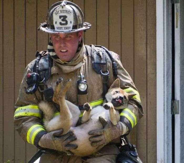 Пожежники і врятовані ними тварини (47 фото)