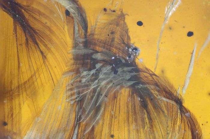 У бурштині виявили стародавню птицю, яка жила 99 мільйонів років тому (6 фото)