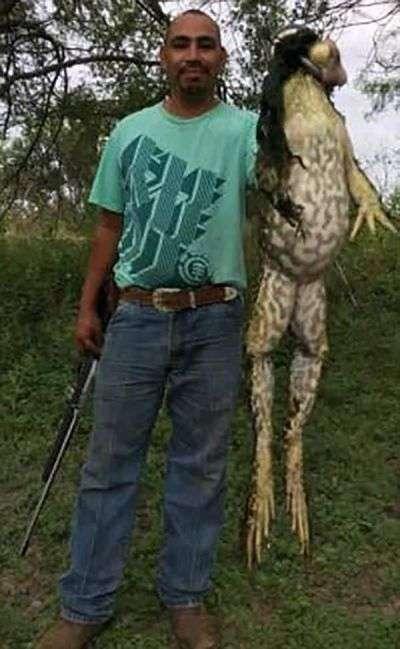 Користувачів мережі збентежила величезна жаба (2 фото)