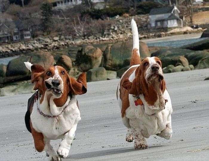Забавні собачки (22 фото)
