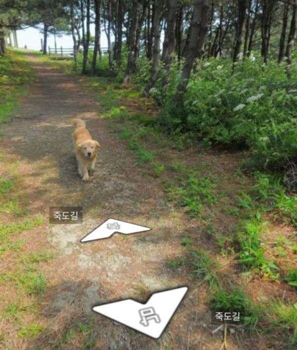 Зацікавившись камерою пес потрапив на знімки Google Street View (7 фото)
