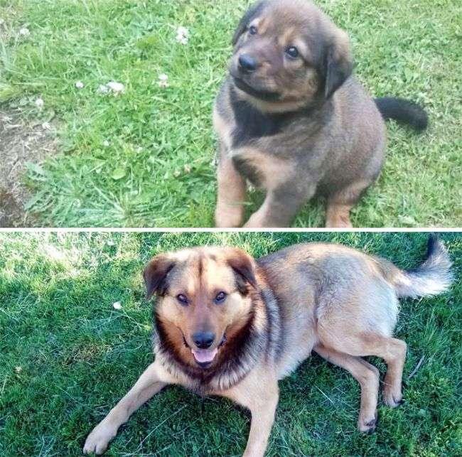 Вчорашні цуценята, стали дорослими собаками (25 фото)