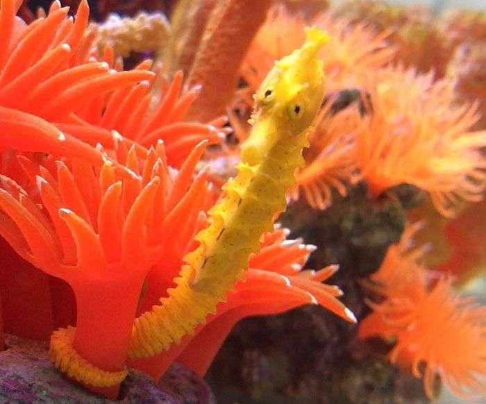 Порятунок морського коника (8 фото)