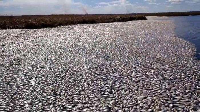Масова загибель риби в озері Кунашак в Челябінській області (5 фото + відео)