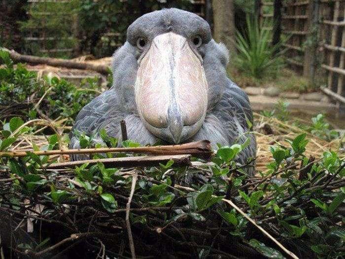 Так чи небезпечна ця птиця, як здається? (2 фото)