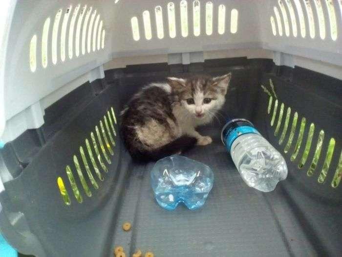 Для порятунку кошеня в Челябінську демонтували ліхтарний стовп (6 фото)