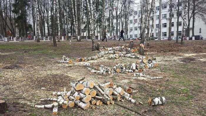 У Сергієвому Посаді зрубали Гай Перемоги, висаджену ветеранами (9 фото)