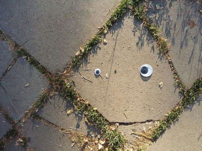 Забавні очі Googly Eyes на неживих предметах (25 фото)
