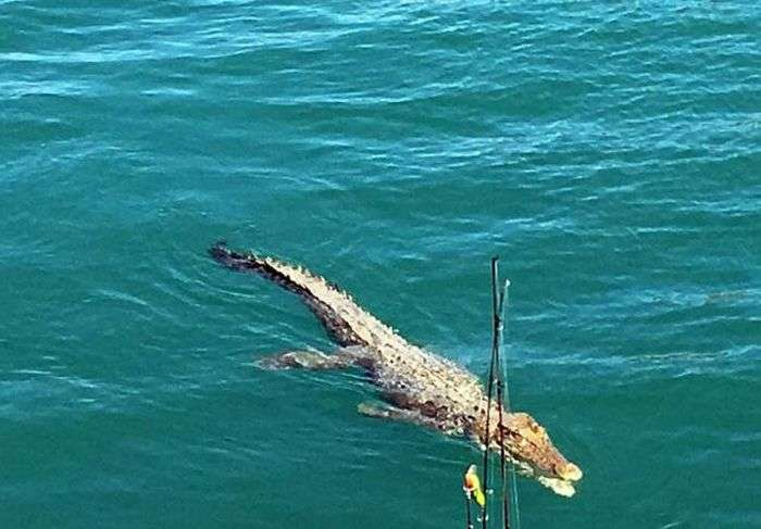 Типова картина для любителів риболовлі в Австралії (6 фото)
