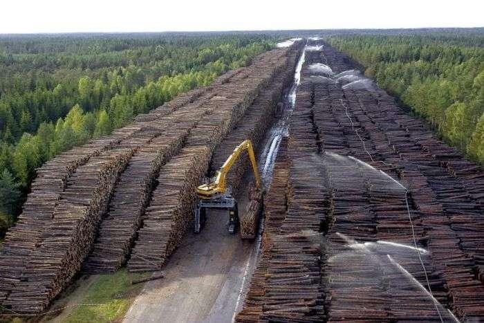 Найбільше у світі сховище деревини в Швеції (6 фото)